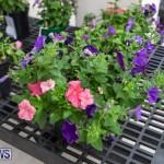 Ag Show Plants Bermuda, April 10 2019-9380