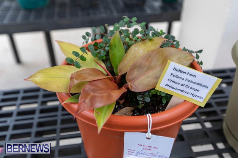 Ag-Show-Plants-Bermuda-April-10-2019-9425
