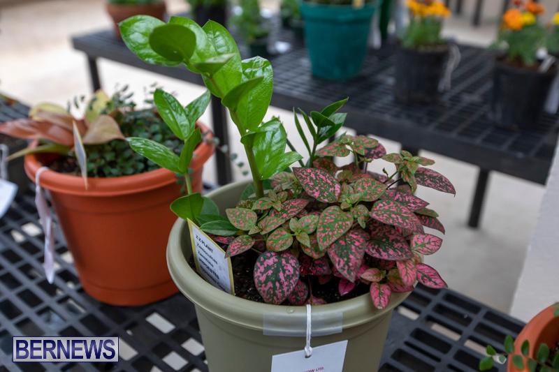 Ag-Show-Plants-Bermuda-April-10-2019-9426