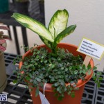 Ag Show Plants Bermuda, April 10 2019-9428