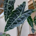 Ag Show Plants Bermuda, April 10 2019-9449