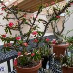 Ag Show Plants Bermuda, April 10 2019-9456