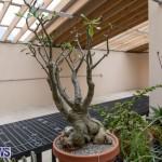 Ag Show Plants Bermuda, April 10 2019-9462