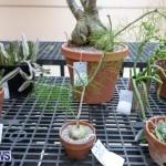 Ag Show Plants Bermuda, April 10 2019-9465