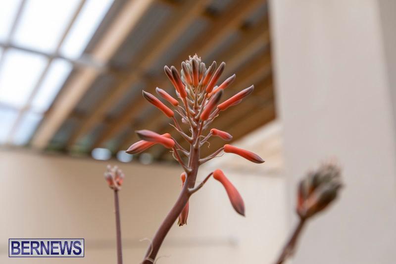 Ag-Show-Plants-Bermuda-April-10-2019-9483
