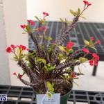 Ag Show Plants Bermuda, April 10 2019-9508