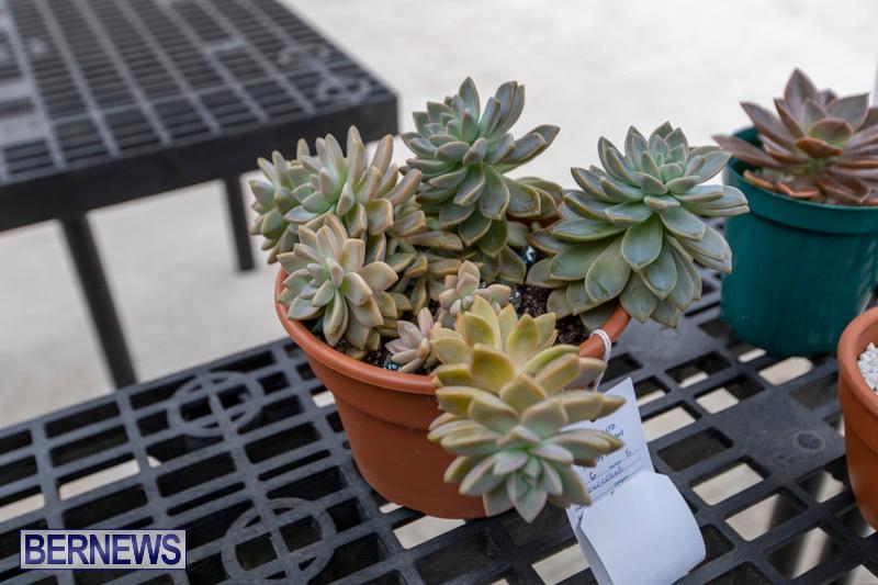 Ag-Show-Plants-Bermuda-April-10-2019-9509