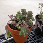 Ag Show Plants Bermuda, April 10 2019-9510