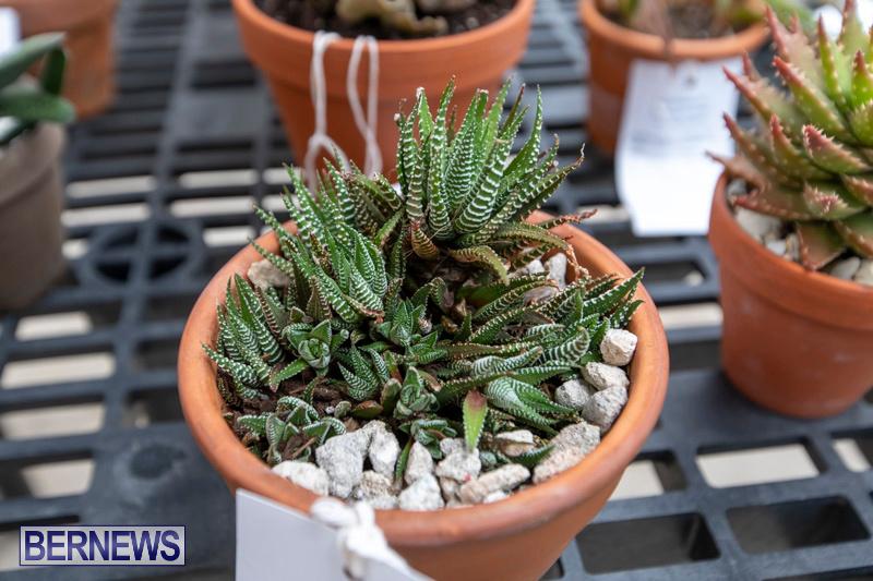 Ag-Show-Plants-Bermuda-April-10-2019-9517