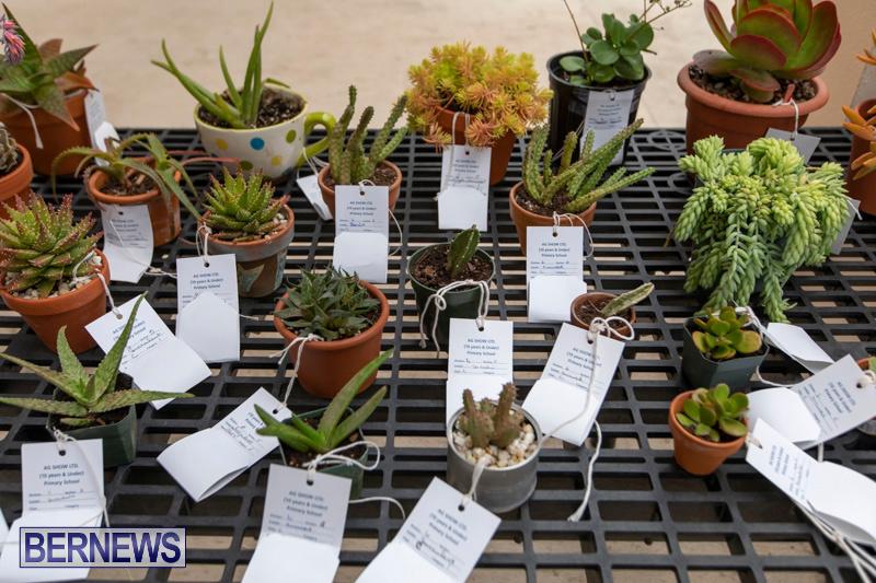Ag-Show-Plants-Bermuda-April-10-2019-9520