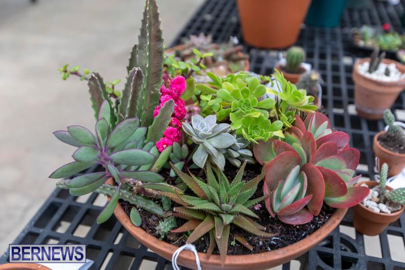 Ag-Show-Plants-Bermuda-April-10-2019-9524