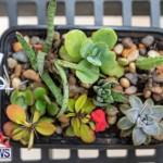 Ag Show Plants Bermuda, April 10 2019-9531