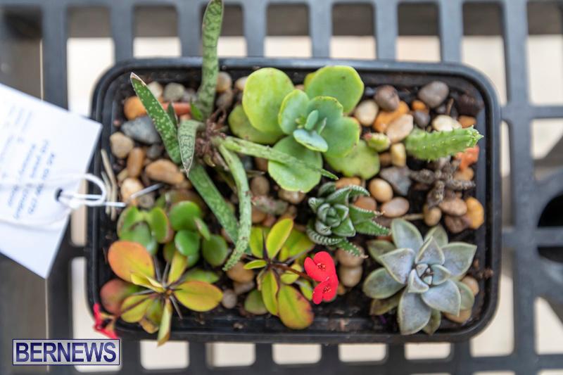 Ag-Show-Plants-Bermuda-April-10-2019-9531