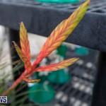 Ag Show Plants Bermuda, April 10 2019-9536
