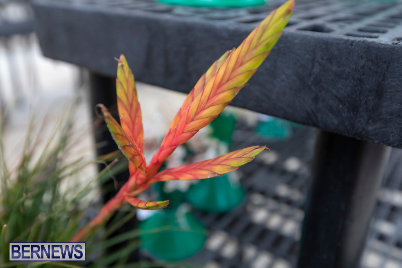 Ag-Show-Plants-Bermuda-April-10-2019-9536