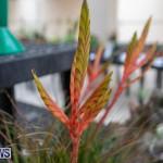 Ag Show Plants Bermuda, April 10 2019-9537