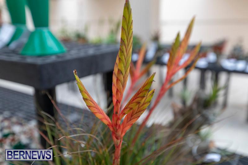 Ag-Show-Plants-Bermuda-April-10-2019-9537