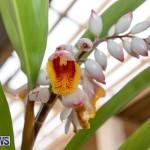 Ag Show Plants Bermuda, April 10 2019-9549