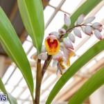 Ag Show Plants Bermuda, April 10 2019-9554