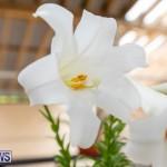 Ag Show Plants Bermuda, April 10 2019-9556