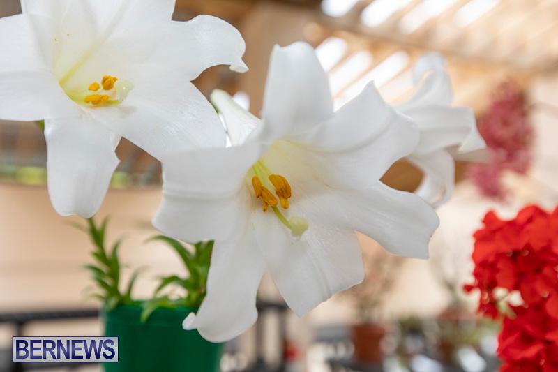 Ag-Show-Plants-Bermuda-April-10-2019-9557