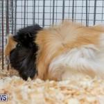 Ag Show Poultry Bermuda, April 10 2019-0012