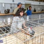Ag Show Poultry Bermuda, April 10 2019-0029