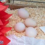 Ag Show Poultry Bermuda, April 10 2019-9956