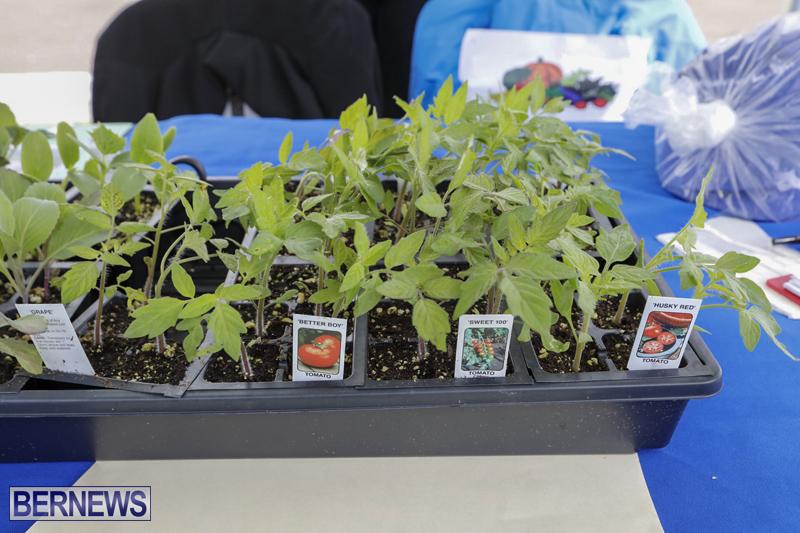 Farmer's Market Eat More Vegetables Bermuda April 10 2019 (15)