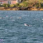 World Triathlon Bermuda Amatuer Age Group races, April 27 2019-3904
