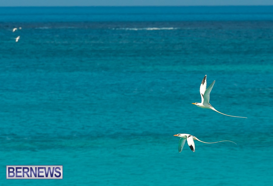 300 Pairs of Longtails are seen all over the shores this time of year