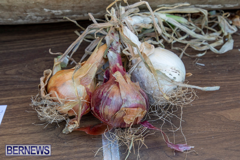 Bermuda-Onion-Day-at-Carter-House-May-18-2019-6822