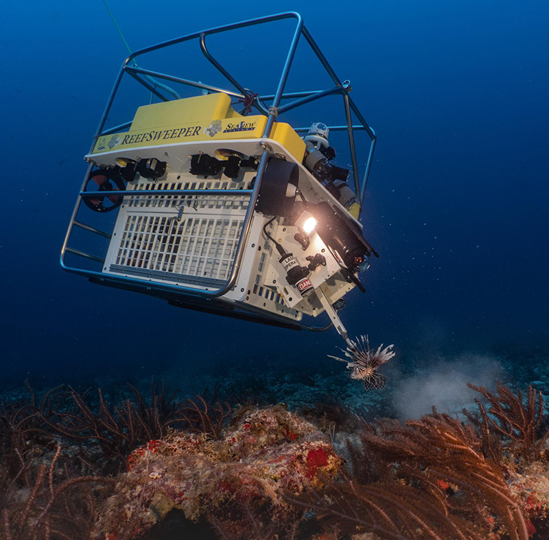 Atlantic Lionshare ReefSweeper Bermuda Aug 2019