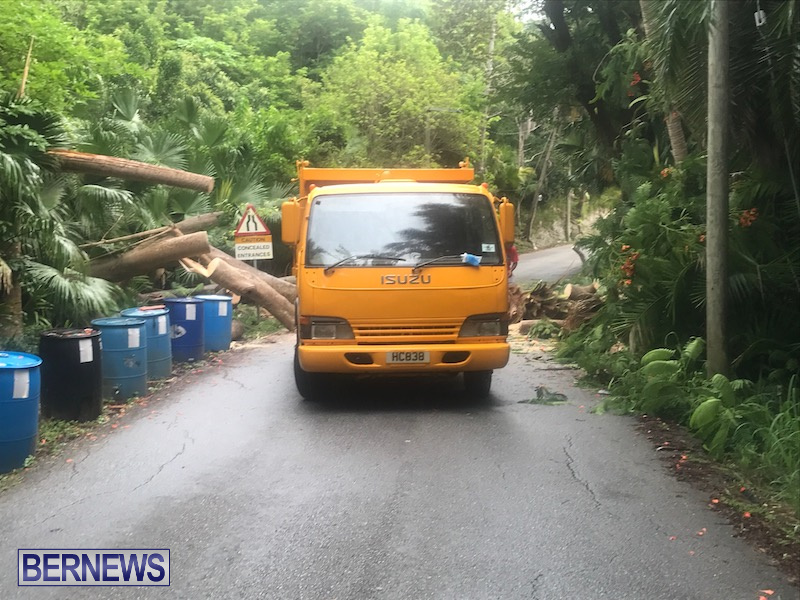 Tree Parsons Lane Bermuda Aug 11 2019 11