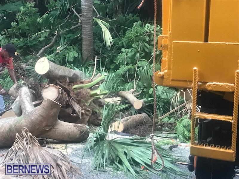 Tree Parsons Lane Bermuda Aug 11 2019 3