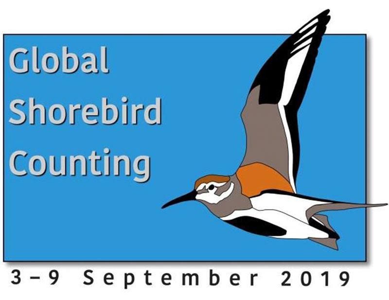 Audubon-Society-Shorebirds-Day