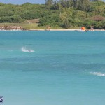 Open Water Bermuda National Swimming Championships, September 15 2019-0039