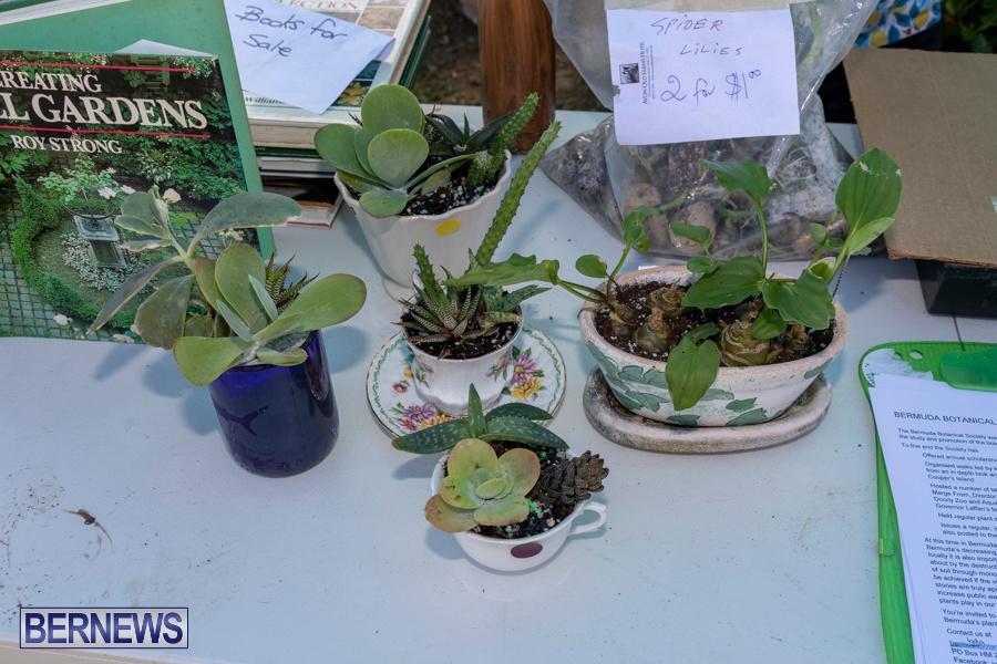 Bermuda Botanical Society Plant Sale, October 12 2019-4653