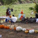 J&J Produce Pick Your Own Pumpkin Bermuda October 11 2019 (1)