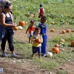 J&J Produce Pick Your Own Pumpkin Bermuda October 11 2019 (10)