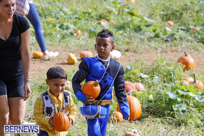 JJ-Produce-Pick-Your-Own-Pumpkin-Bermuda-October-11-2019-11