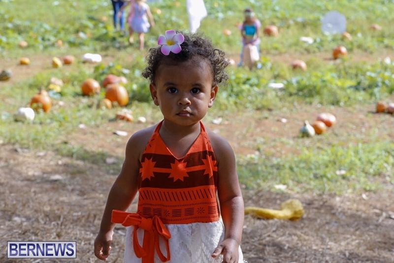 JJ-Produce-Pick-Your-Own-Pumpkin-Bermuda-October-11-2019-12