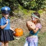 J&J Produce Pick Your Own Pumpkin Bermuda October 11 2019 (23)