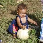 J&J Produce Pick Your Own Pumpkin Bermuda October 11 2019 (24)