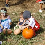 J&J Produce Pick Your Own Pumpkin Bermuda October 11 2019 (25)