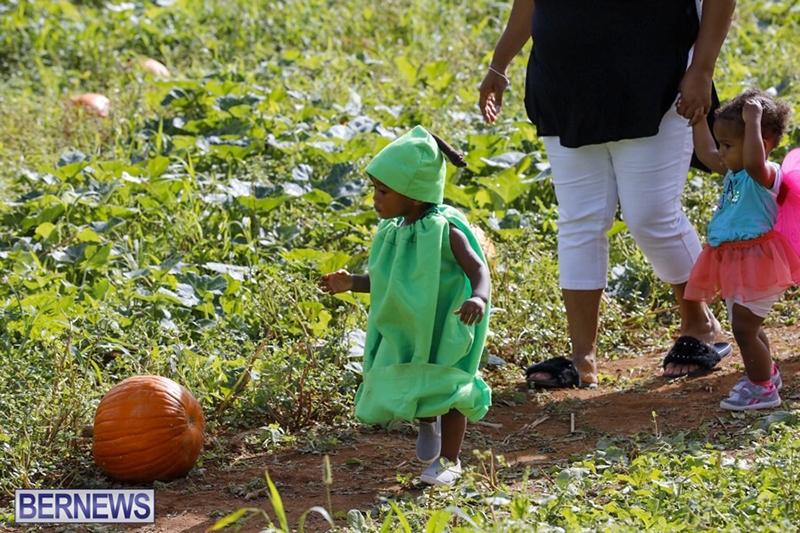JJ-Produce-Pick-Your-Own-Pumpkin-Bermuda-October-11-2019-29