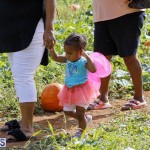 J&J Produce Pick Your Own Pumpkin Bermuda October 11 2019 (30)
