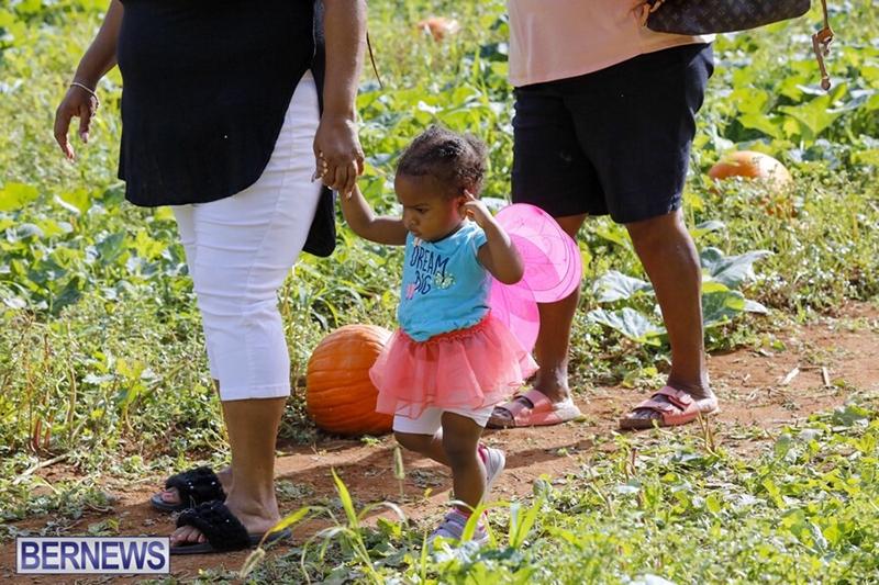 JJ-Produce-Pick-Your-Own-Pumpkin-Bermuda-October-11-2019-30