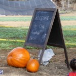 J&J Produce Pick Your Own Pumpkin Bermuda October 11 2019 (50)