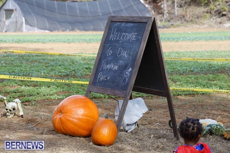 JJ-Produce-Pick-Your-Own-Pumpkin-Bermuda-October-11-2019-50